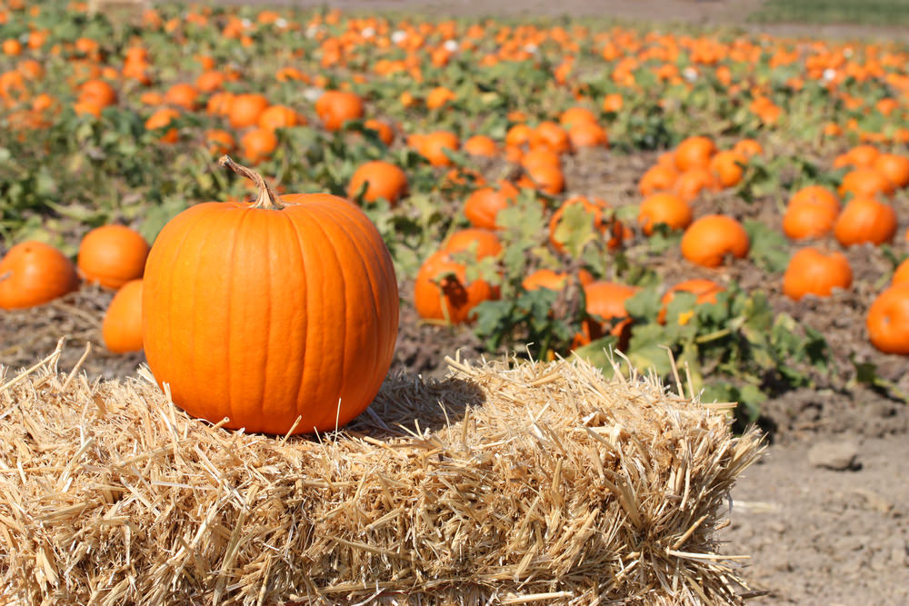 Five Fun Fall Activities for the Whole Family