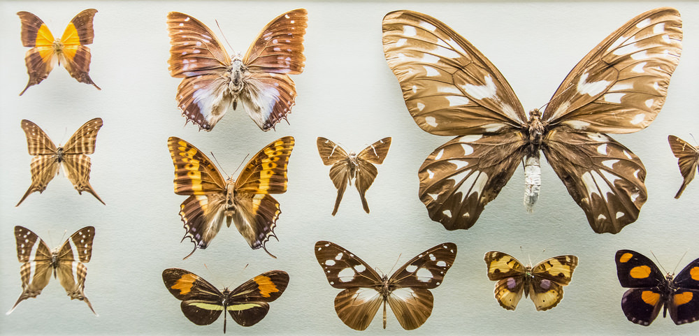 Season Opening Of The Butterfly Conservatory At The American Museum Of  Natural History