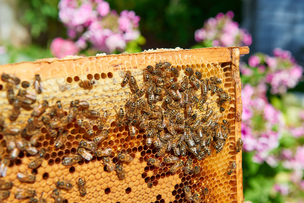 """Brooklyn and the Bees"" Talk and Tasting at the Brooklyn Historical Society on April 23"