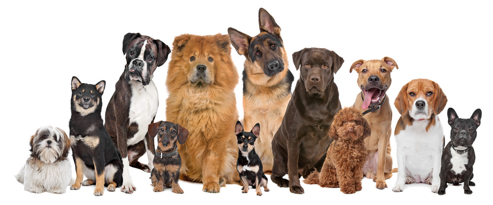Bring Your Pooch to BarkFest 2015 on July 19!
