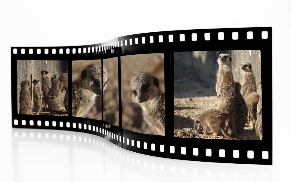 Don't Miss the New York WILD Film Festival on January 28-31